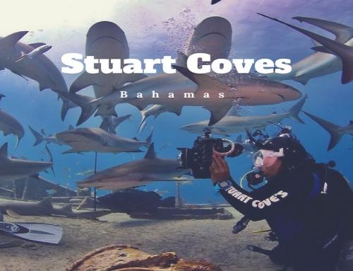 Stuart Coves