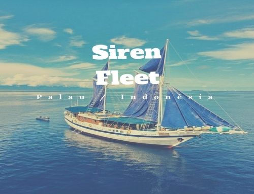 Siren Fleet Liveaboards