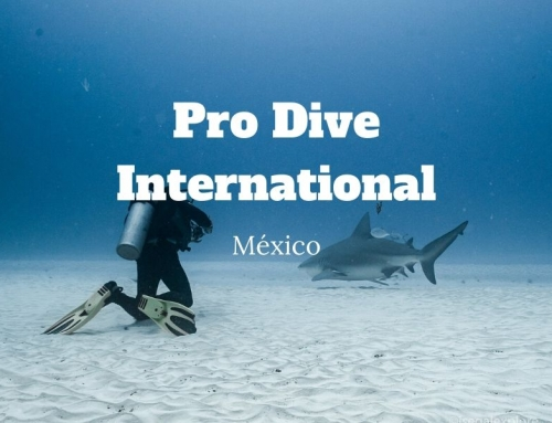 Pro Dive International